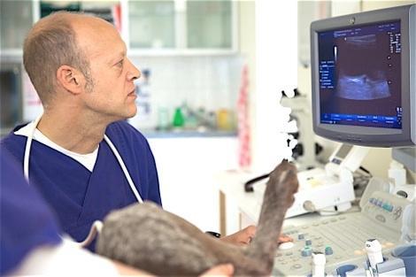 Dr. Dirk Wischer