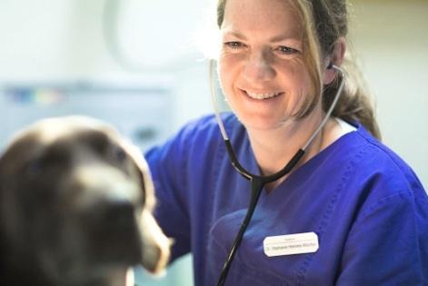 Dr. Stephanie Heemke-Wischer